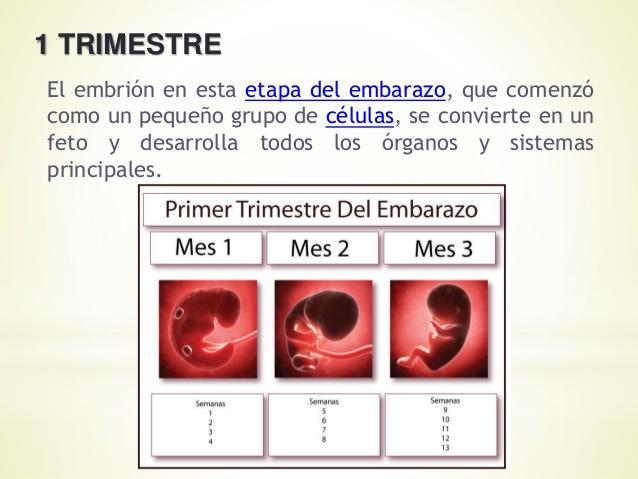 Desarrollo del bebé mes a mes en el embarazo en imágenes