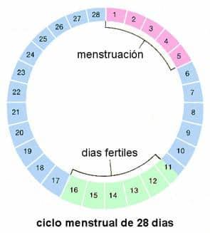 El ciclo menstrual y días fértiles: cómo saber cuándo estás ovulando